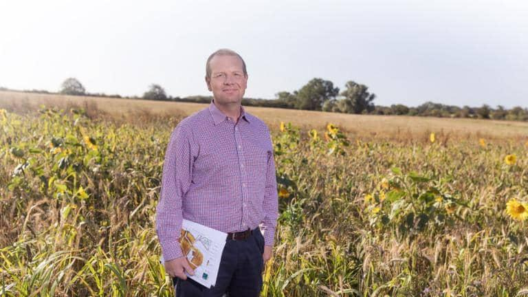 A man stands in a field of sunflowers in the sunshine