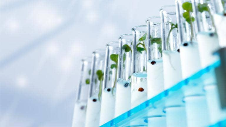 Green shoots are growing in a row of glass test tubes in a lab