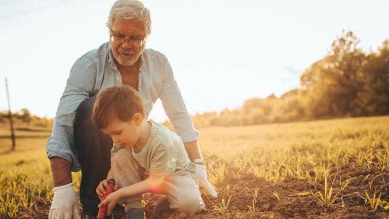 A child holding a spade helps his grandfather to weed