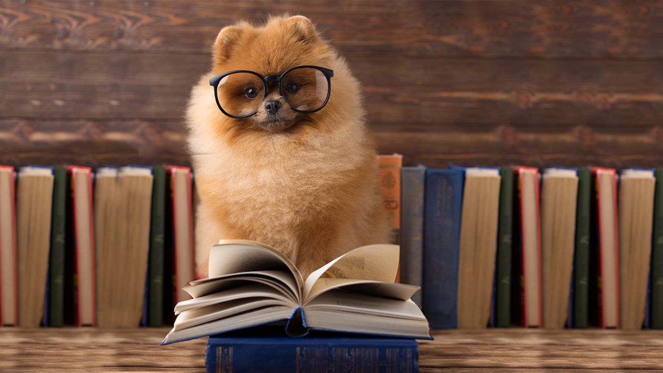 A fluffy ginger dog wearing glasses with an open book in front of them