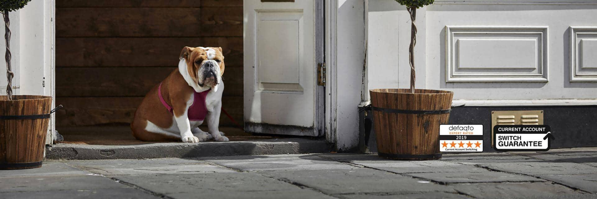 A British Bulldog sitting on the stone threshold of a white painted double doorway